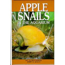 APPLE SNAILS IN THE AQUARIUM