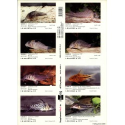 AQUALOG SUPPL. CORYDORAS 2